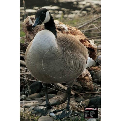 Maximal Canadian Goose