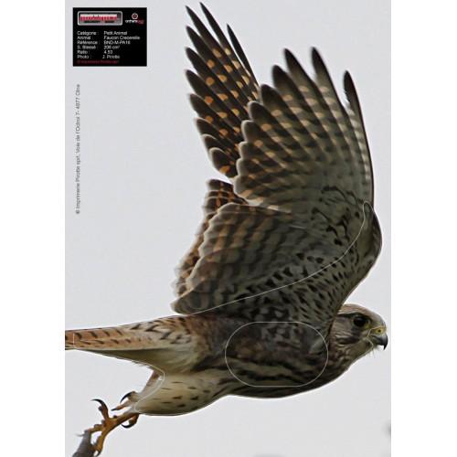 Maximal Flying Falcon