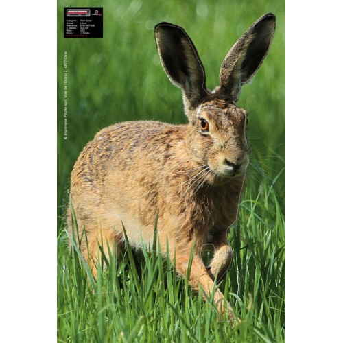 Maximal Hare